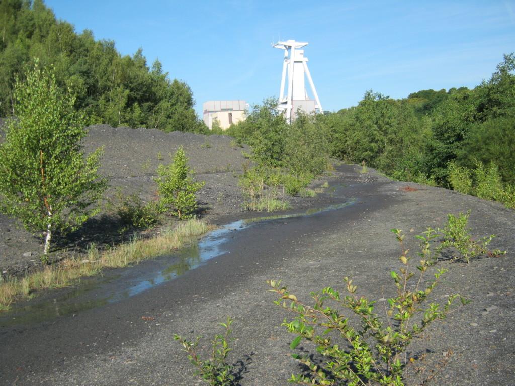singletrails saarland Lüneburg